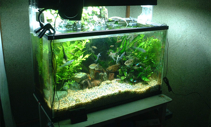 A quick guide for keeping fish in a nano reef tank