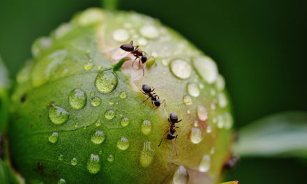 Tips to get rid of ants in your home