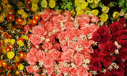 7 amazing ways to preserve your roses and other types of flowers