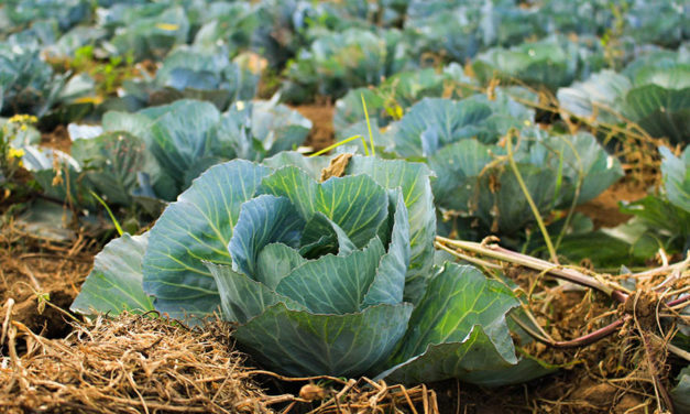 5 reasons why you should grow your own food