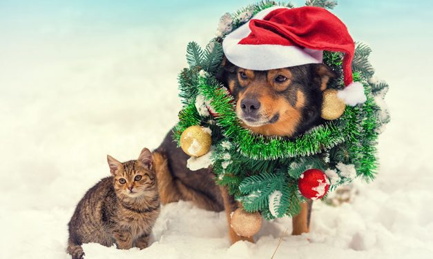 Keep holidays safe and festive for your pets