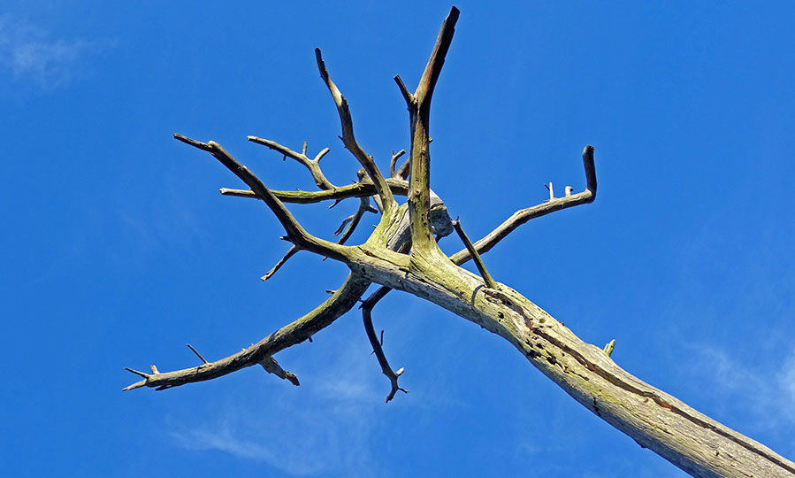 No tree left behind! Top 5 signs you have a dying tree