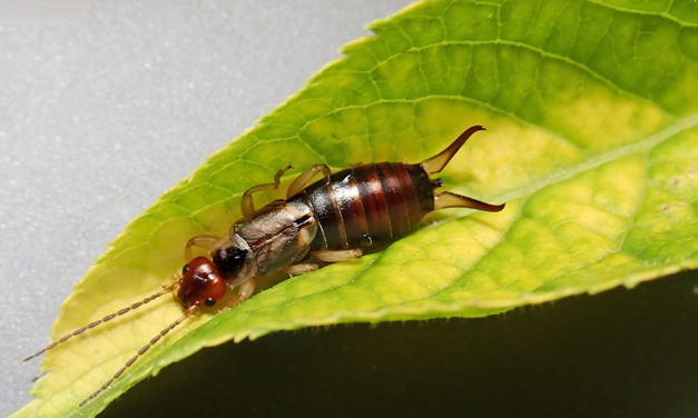 Handling common pest infestations in your home