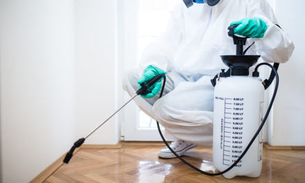 Top reasons to hire a pest control company