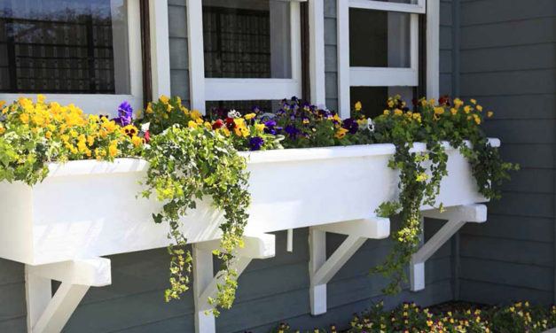 Common features of the best window boxes and planters