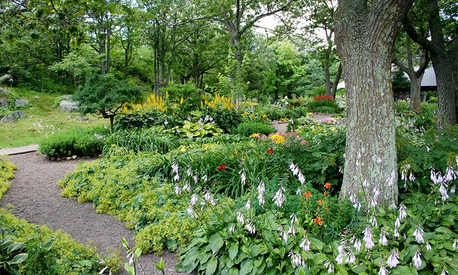 Landscaping ideas for a tight budget