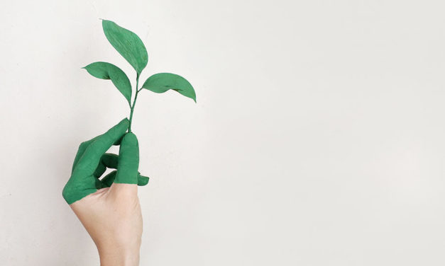 How to go green: 10 easy tips everyone should know