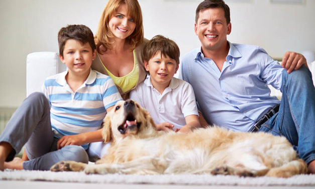 How to have a clean house with your dog around