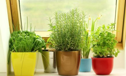 5 tips to create an indoor herb garden