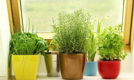 5 tips to create an indoor herb garden