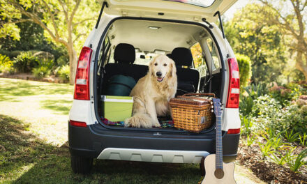 Is it safe to travel with a dog who has kidney disease?