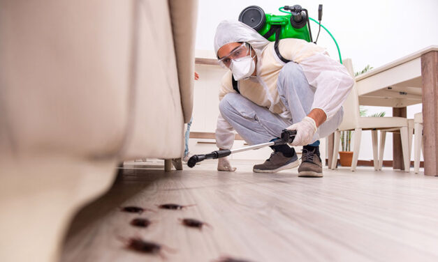 Pest protection: how to keep insects out of your home for good