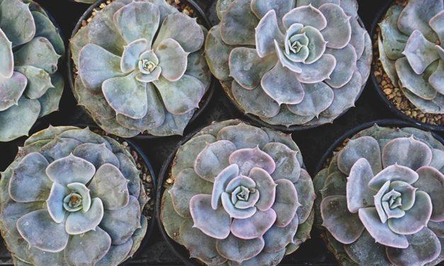 8 'tools' to successful succulent gardening