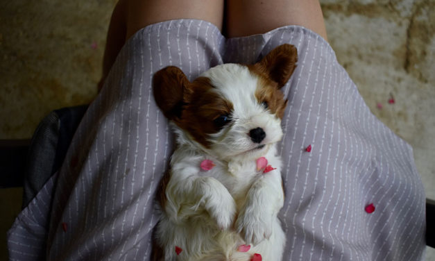A new owner's guide to puppy care