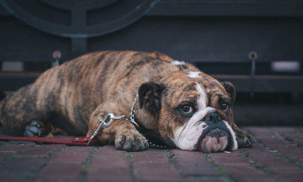 3 things to reduce your pet's stress while you're on vacation