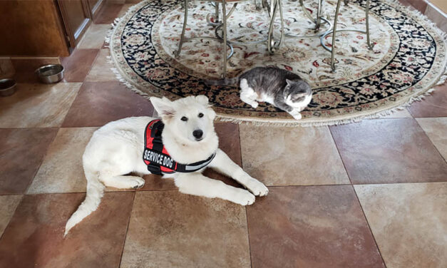 Psychiatric service dogs: are they the same as regular service dogs?