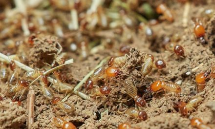 5 warning signs you have a termite problem